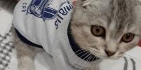 Москвичи делятся забавными фото своих модных кошек и собак