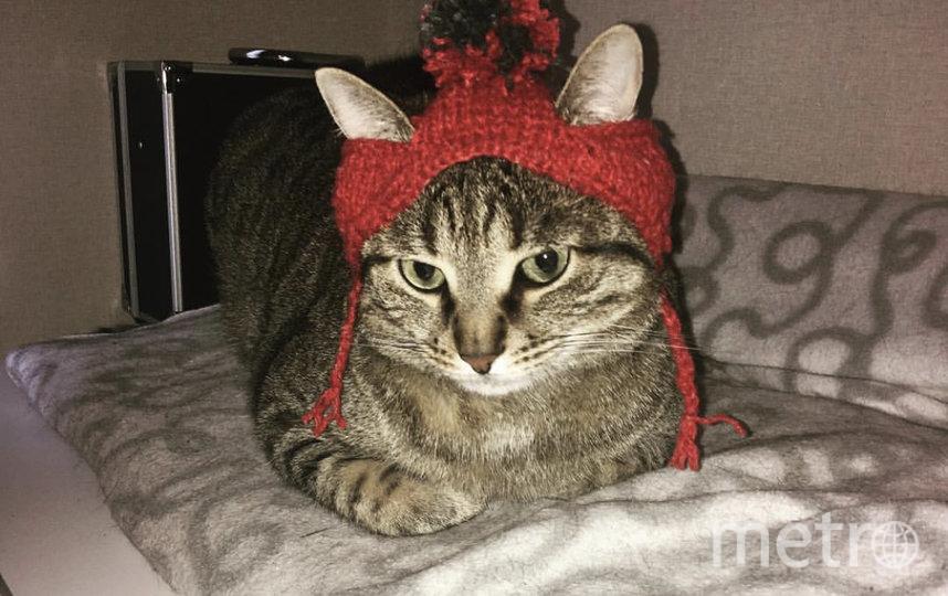 "Клёкс примерил hand-made шапочку. Фото  Дарья Полескова, ""Metro"""