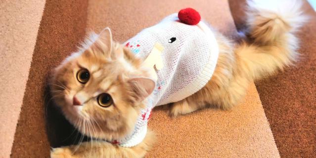 Этот модный олененок - кошка Фанта.