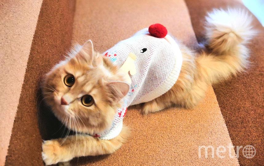 """Этот модный олененок - кошка Фанта. Фото Екатерина Кучумова, """"Metro"""""""