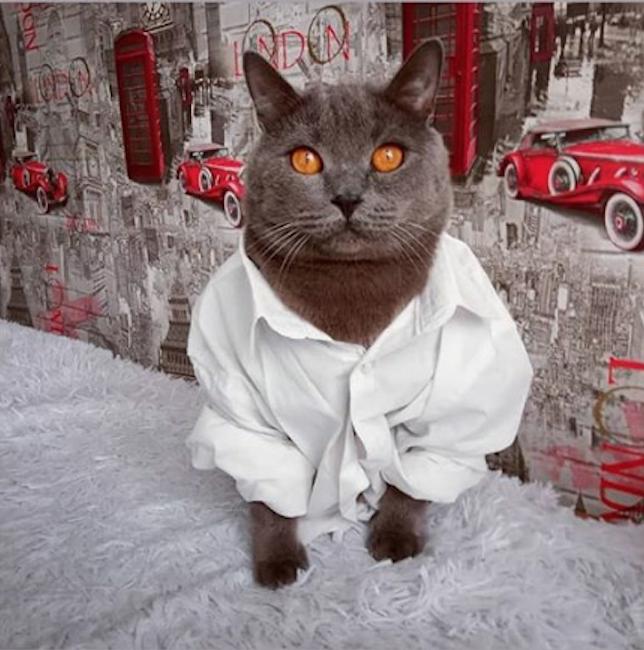 "Покоритель женских сердец – кот БАКС. Фото Сидунова Яна, ""Metro"""