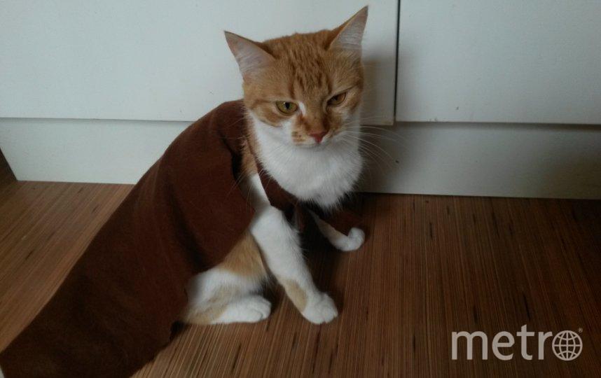"""Некоторые коты в сапогах, в Сима - в плаще. Фото Андрей Парфенов, """"Metro"""""""