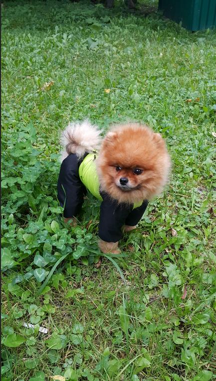 """Гриша (Гранд Ямодеро Круз) любит позировать, как фотомодель. Обожает модничать и показать себя во всей красе. Фото Нажесткина Жанна, """"Metro"""""""