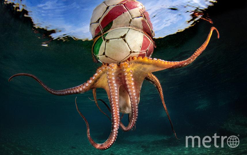 """Снимок """"Тренировка осьминога"""". Фото UPY 2020   Паскаль Вассальо"""