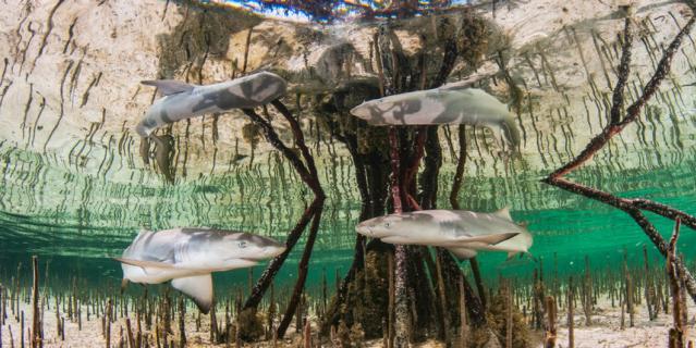 """Снимок """"Детский сад для акул""""."""