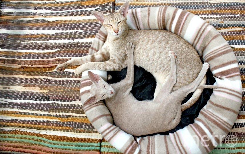 Вид кошек повышает уровень окситоцина в крови. Фото pixabay.com