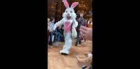 На показе дочери Пола Маккартни на подиум вышли кролики, коровы и лисы – видео
