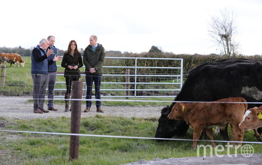 с директором фермы Эдди О'Риорданом (крайний слева) и специалистом по говядине Полом Кроссоном (второй слева). Фото Getty