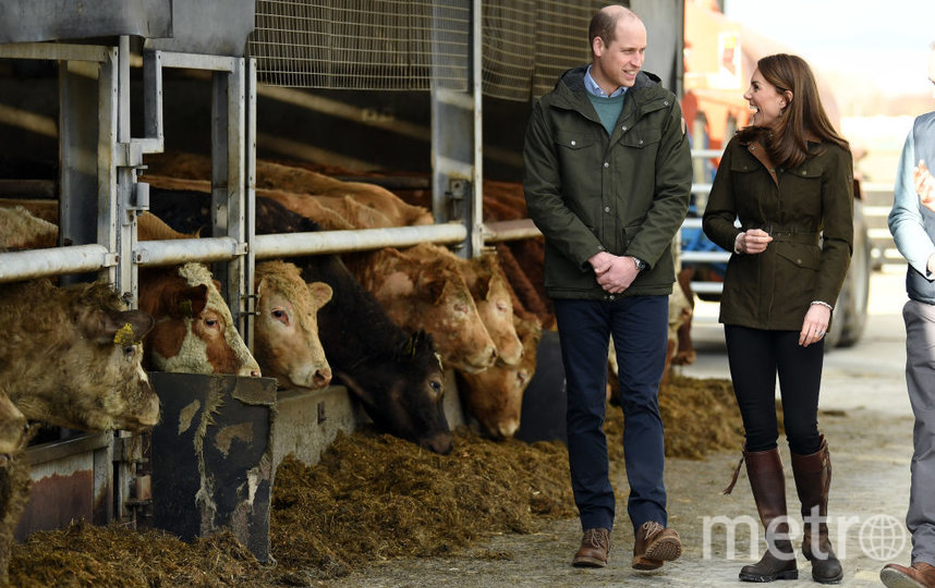 Кейт и Уильям в графстве Мит в Ирландии. Фото Getty