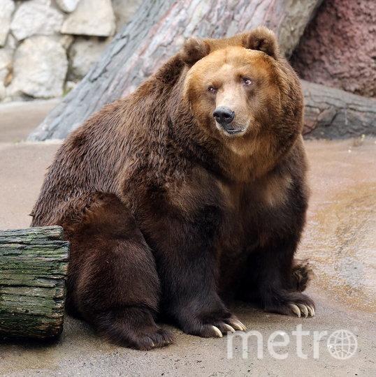 Теперь медведи готовятся вернуться к своему привычному ритму жизни. Фото mos.ru
