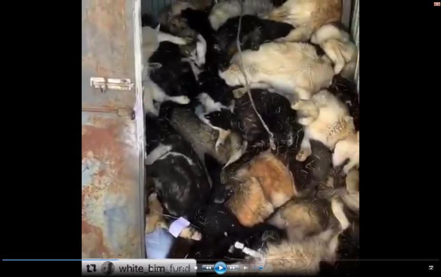 Трупы якобы бешеных животных просто свалены в кучу. Фото скриншот видео instagram @white_bim_fund