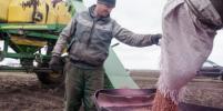 Молодые работники сельского хозяйства получат «подъемные» из областного бюджета