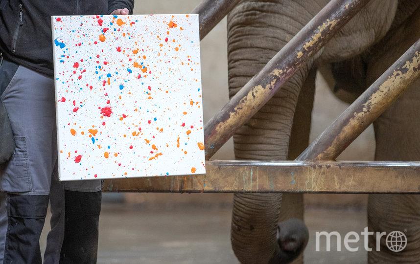 Слон научился рисовать картины… хоботом. Фото Getty