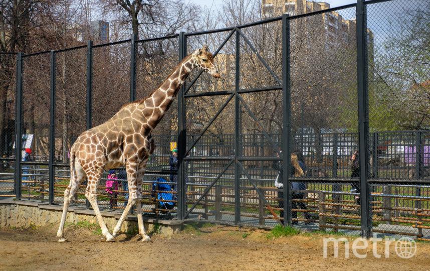 Московский зоопарк изменит режим работы. Фото Василий Кузьмичёнок