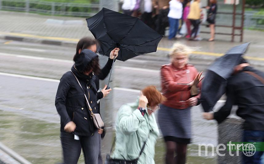 Москвичей предупредили об усилении ветра в пятницу до 24 м/с. Фото Василий Кузьмичёнок