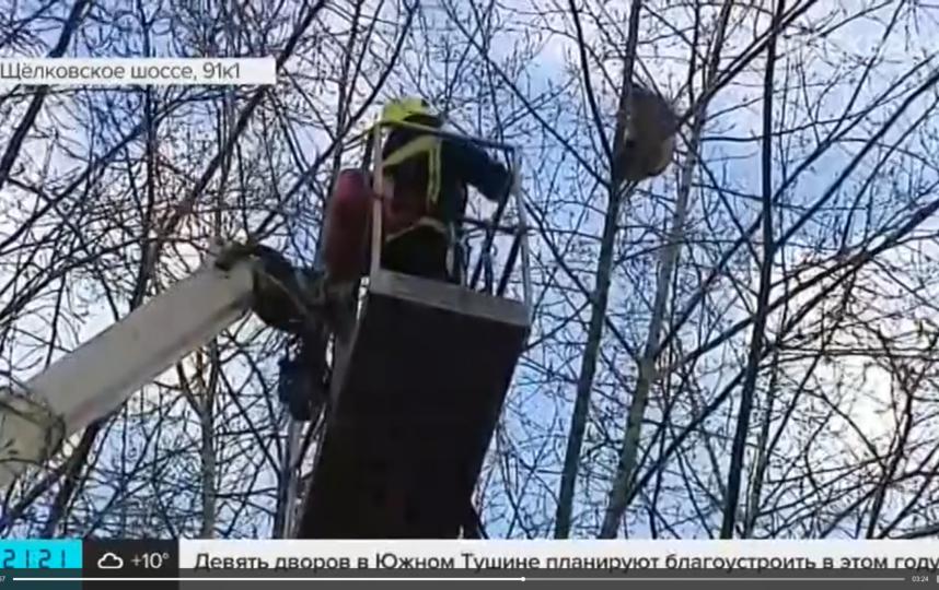 Операция по спасению енота на Щёлковском шоссе. Фото скриншот Москва 24