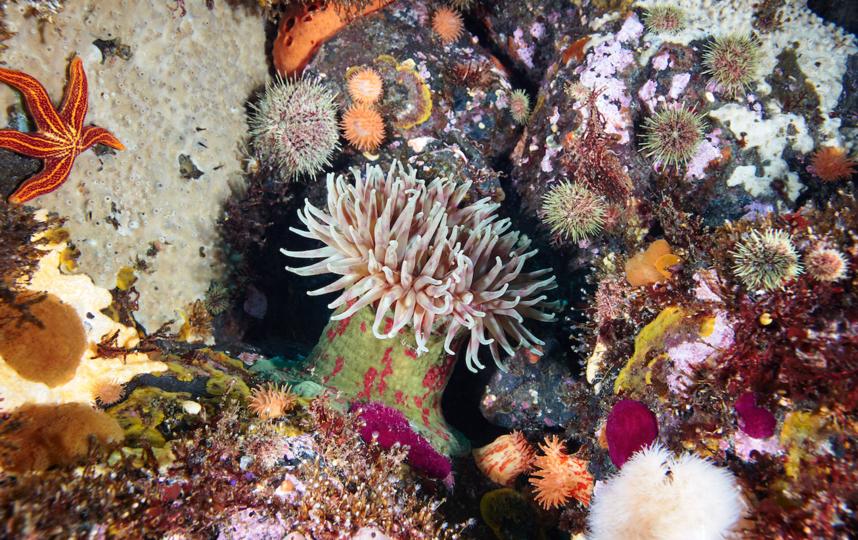 Кораллы не ограничиваются тёплыми мелководьями тропиков. Они также существуют во многих холодных, глубоких водах по всему миру, включая Арктику и Субантарктику. Фото WWF России