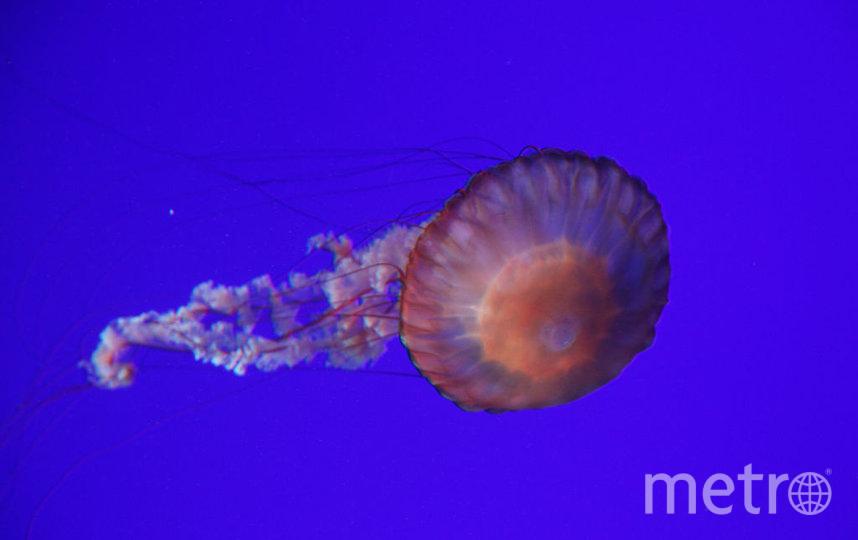 Медуза, из которой можно делать имплант. Фото Getty