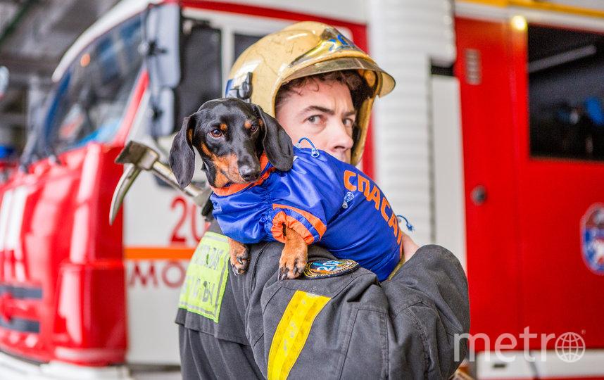 """Такса Маруся служит у Московских спасателей внештатным психологом. Фото пресс-служба Департамента по делам гражданской обороны, чрезвычайным ситуациям и пожарной безопаснос, """"Metro"""""""