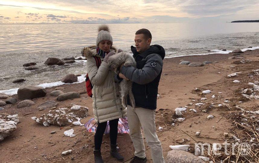 В Петербурге спасли двух бельков балтийской нерпы. Фото sealrescue, vk.com