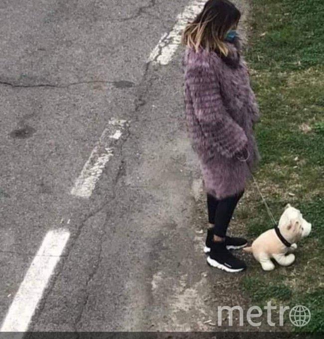 Вот с такими собаками гуляют итальянцы.