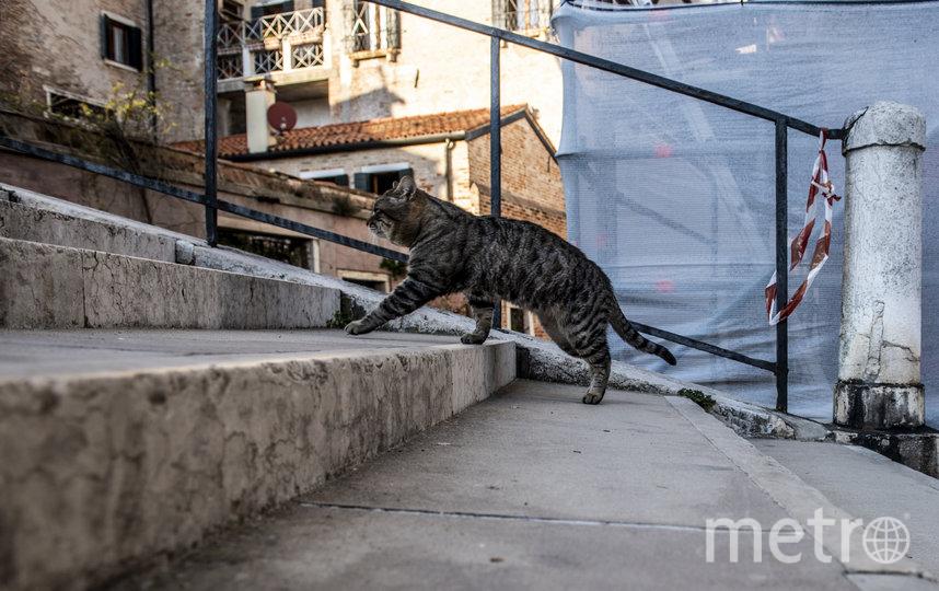 Животные свободно разгуливают по городу. Фото Getty