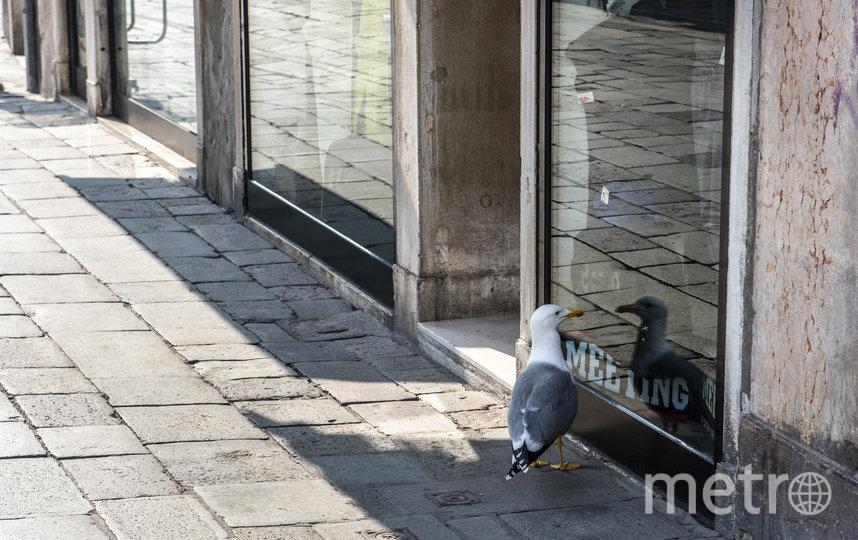 Животные и птицы свободно разгуливают по городу. Фото Getty