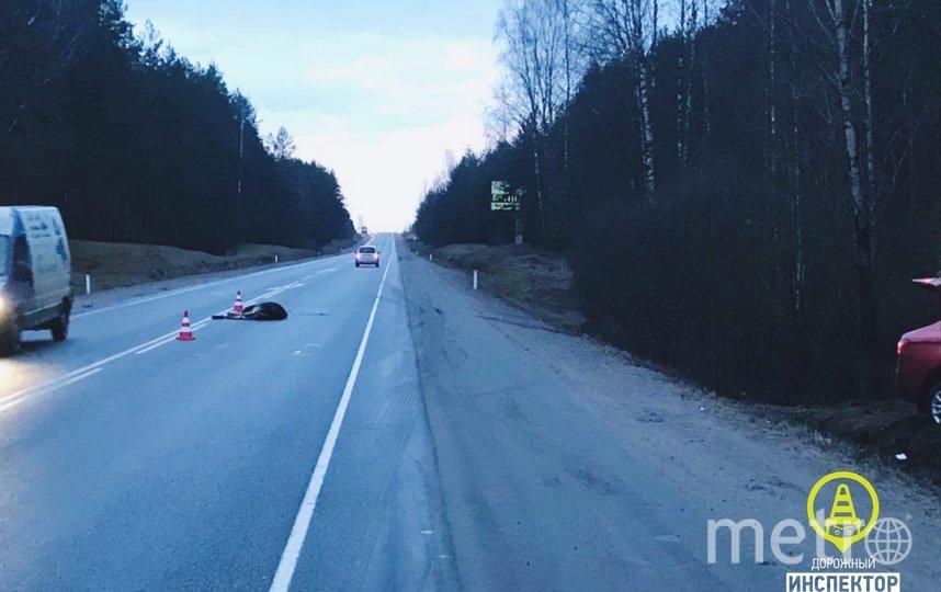 """Машина сбила насмерть лося на трассе. Фото """"Дорожный инспектор"""" /vk.com/dorinspb, vk.com"""