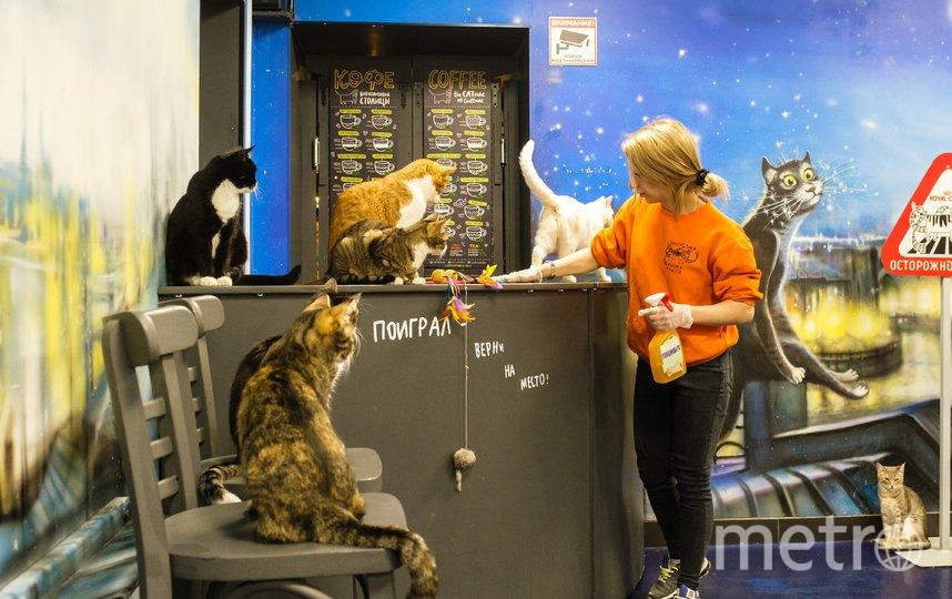 """Республика котов. Фото Алена Бобрович, """"Metro"""""""