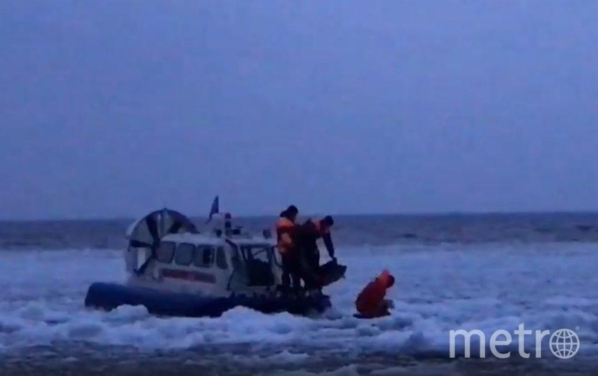 Спасатели МЧС помогли доставить тюлененка на берег. Фото Фонд друзей балтийской нерпы, vk.com