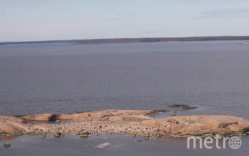 Детеныши ластоногих на камнях в Финском заливе. Фото Фонд друзей балтийской нерпы, vk.com
