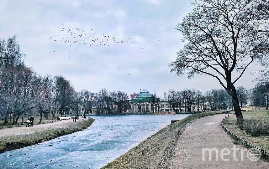 Таврический сад в Петербурге закрыт на просушку. Фото Скриншот @kris_sun_ty