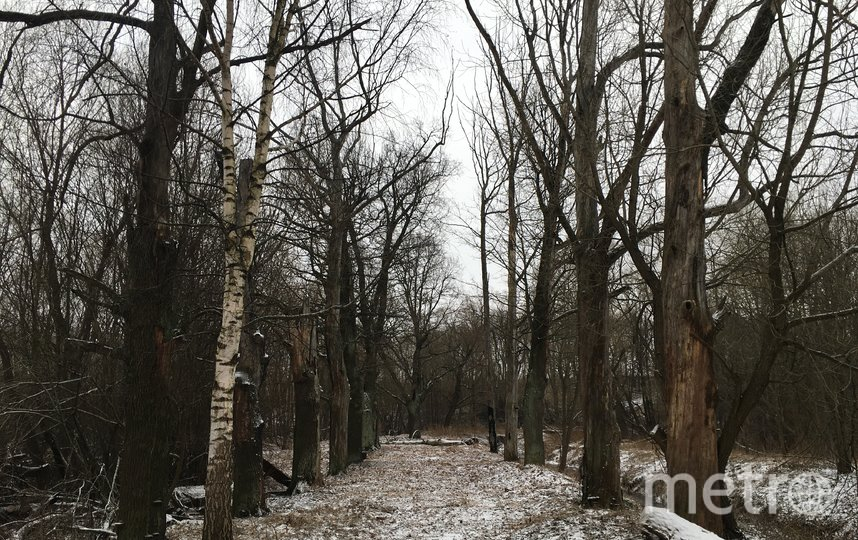 Подъездная аллея. Фото КГИОП