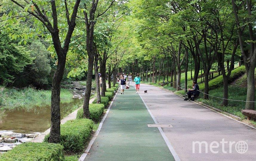 """Сегодня горожан в большей степени интересуют общедоступные объекты, размещение которых не требует сокращения зеленой зоны. Фото https://pixabay.com, """"Metro"""""""