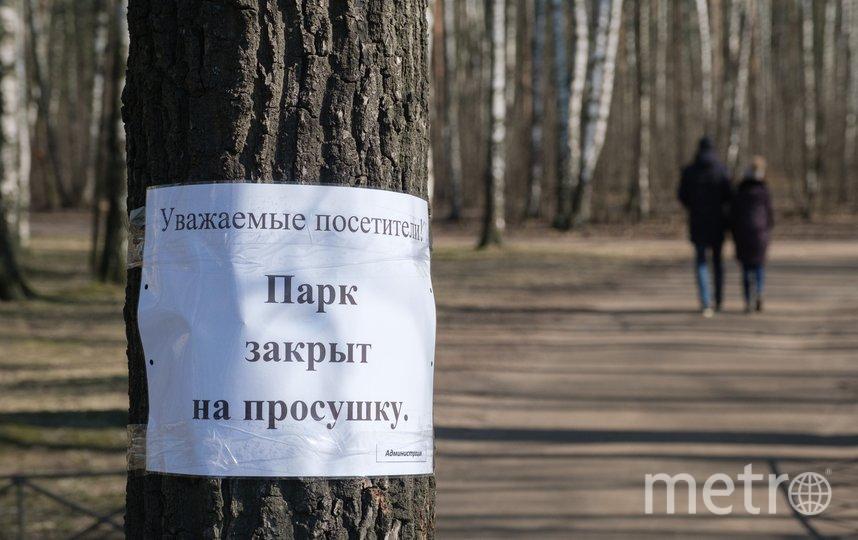 """Парк Сосновка. Фото Алена Бобрович, """"Metro"""""""