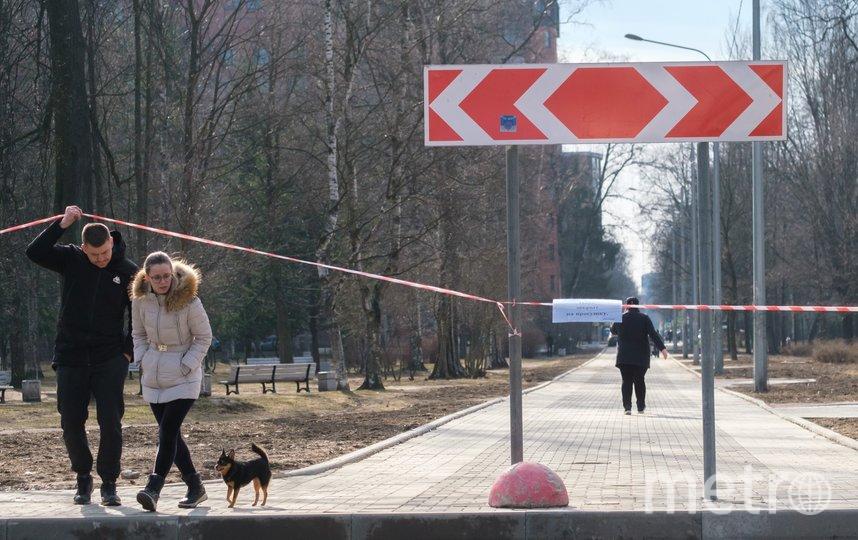 """Березовый сад. Фото Алена Бобрович, """"Metro"""""""