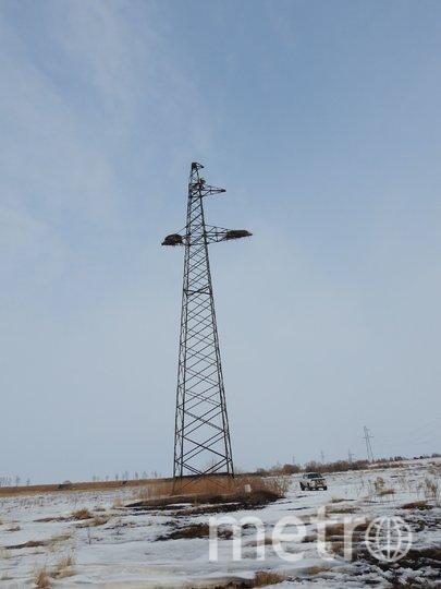 Аисты соорудили гнездо в необычном месте – на электрической вышке в Амурской области. Фото Anton Sasin WWF-Russia
