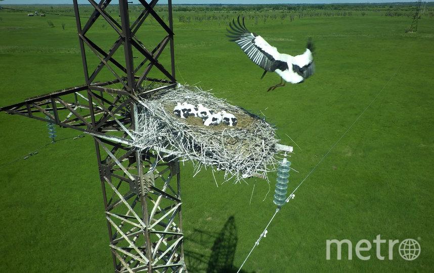 Аисты соорудили гнездо в необычном месте – на электрической вышке в Амурской области. Фото Oleg Kabalik / WWF-Russia