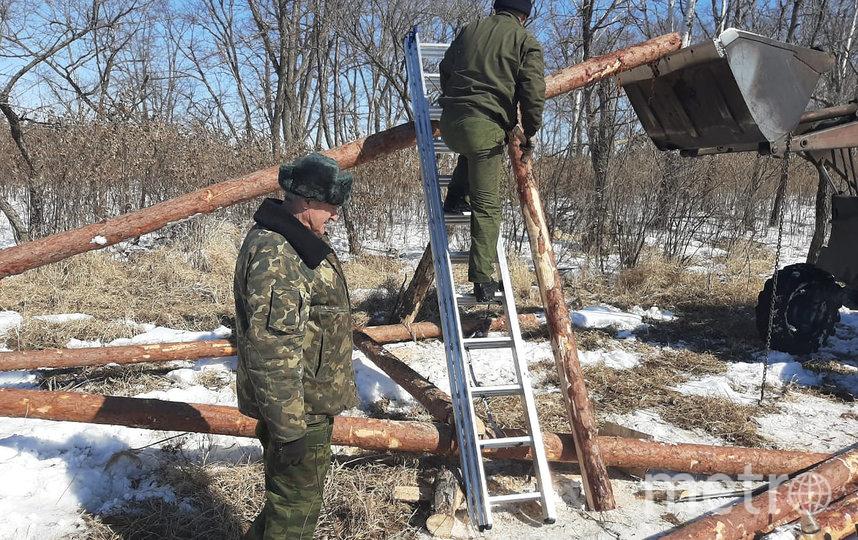 Когда деревья падают, WWF устанавливают искусственные опоры для них, чтобы гнёзда не срывались вниз. Фото AmurSEU / WWF Russia
