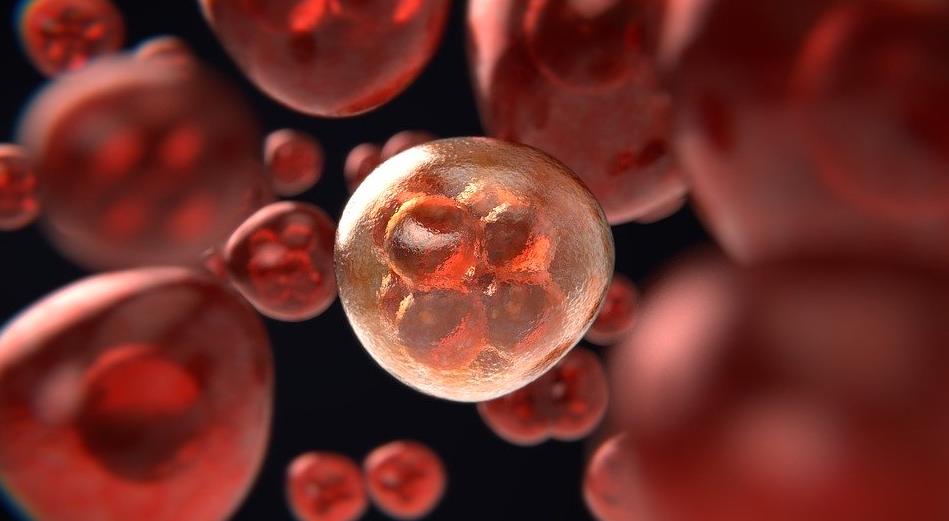 Новый метод основан на изучении паттерна метилирования ДНК опухоли. Фото pixabay.com