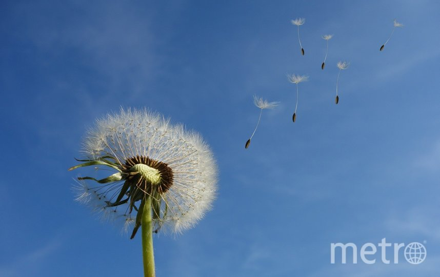 В Петербурге будет сильный ветер. Фото pixabay.com