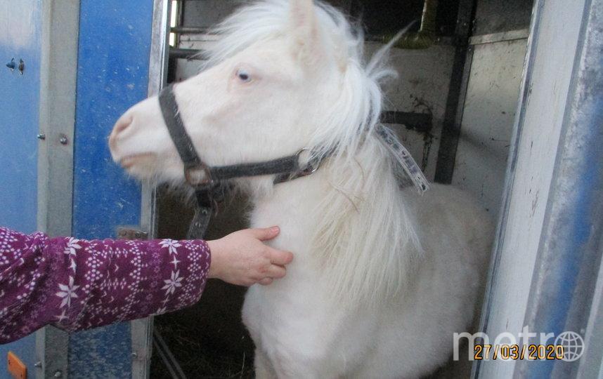 """Пони осмотрели ветеринары. Фото Россельхознадзора, """"Metro"""""""