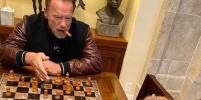 Арнольд Шварценеггер веселит Сеть забавными историями про ослика и пони