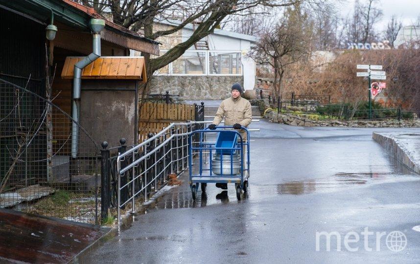 "Ленинградский зоопарк. Фото Алена Бобрович, ""Metro"""