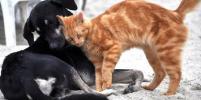В китайском городе Шэньчжэнь запретили есть кошек и собак