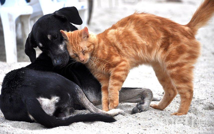 В китайском городе Шэньчжэнь запретили есть кошек и собак. Фото pixabay.com