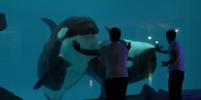Тренировки косаток и кормление акул: