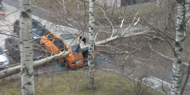 Во дворе дома 7 корпус 2 по улице Вавиловых упавшее дерево раздавило припаркованный микроавтобус.