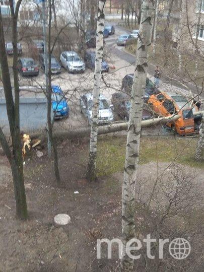 Во дворе дома 7 корпус 2 по улице Вавиловых упавшее дерево раздавило припаркованный микроавтобус. Фото spb_today, vk.com