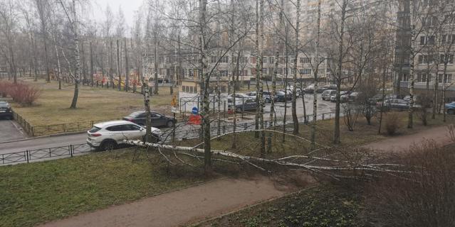 Позже упало дерево во дворе дома по Рихарда Зорге, 7.